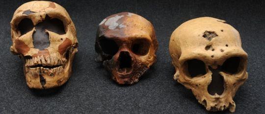 La ausencia de redes sociales podría haber llevado al neandertal a la extinción