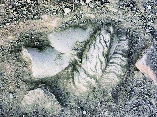 Cabeza de la escultura de Artemisa, encontrada en Turqía