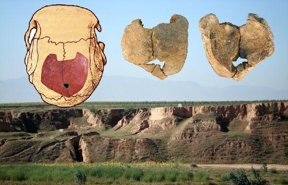 fosil endogamia