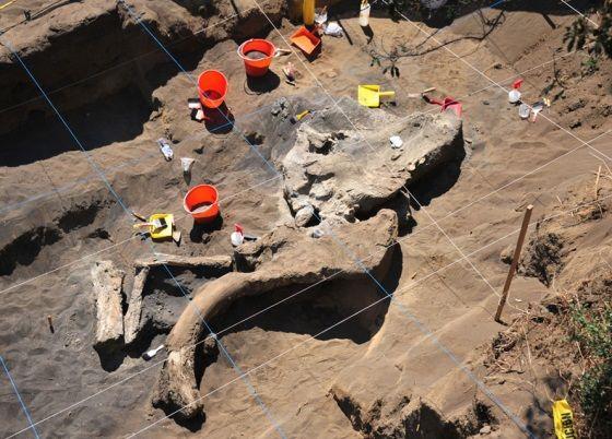 excavan mamut en mexico