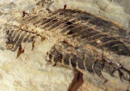 fosiles prehistoricos australia