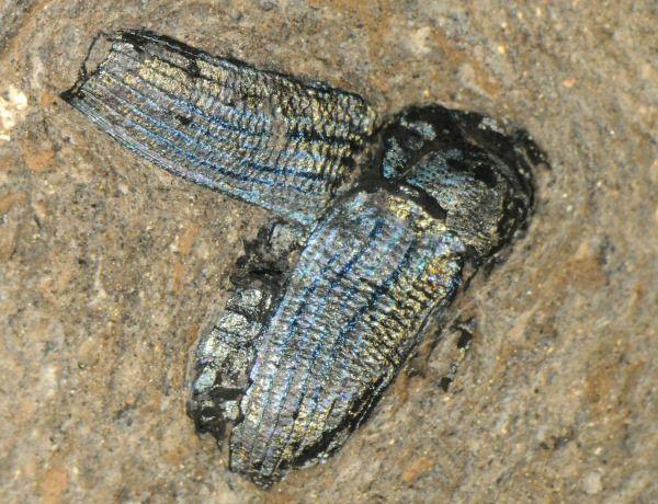 color de los fosiles