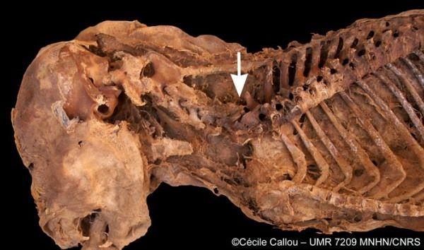 momia perro egipto