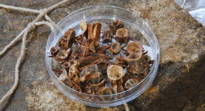 huesos animales catedral de durham