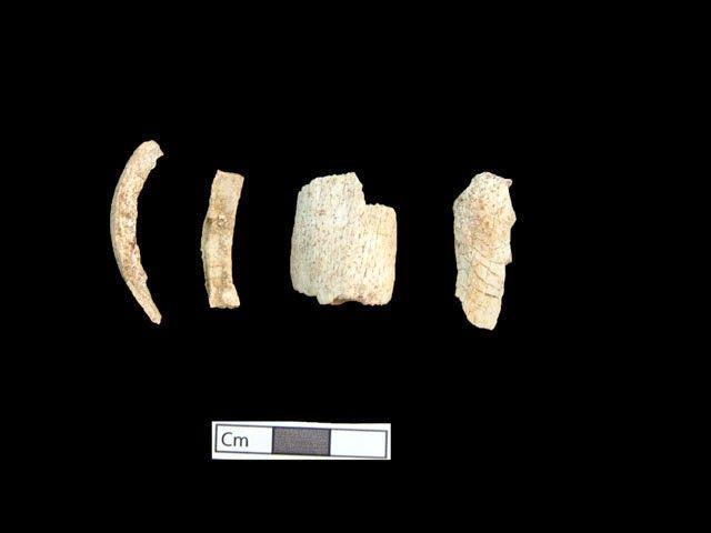 Restos óseos del quinto esqueleto hallado en Anfípolis