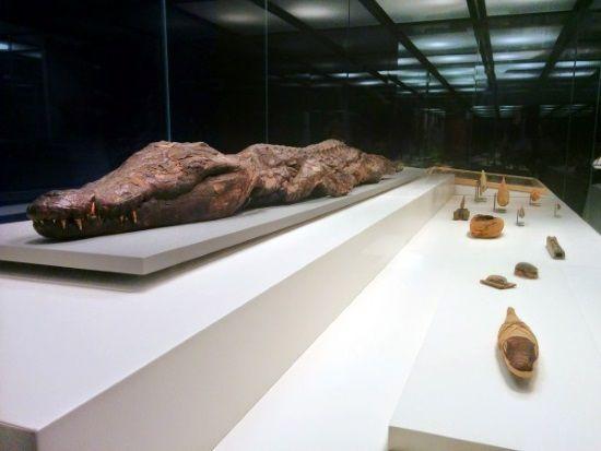 Momia de cocodrilo.