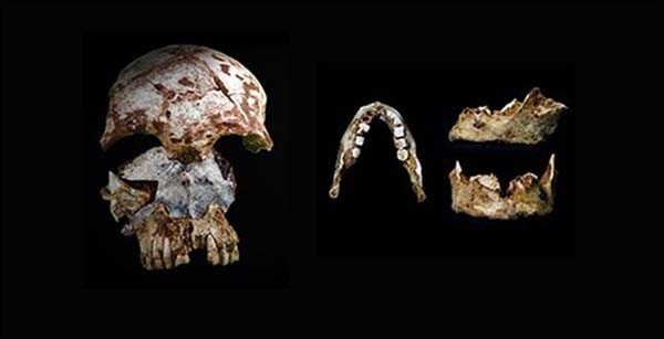 mandibula prehistorica