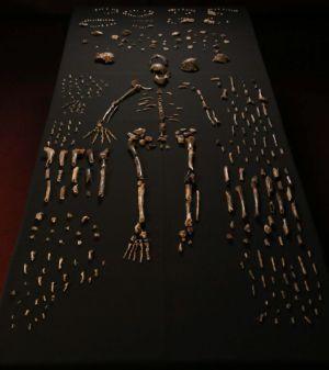 Fósiles analizados en el estudio