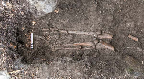 Esqueleto de 1.000 años encontrado en Irlanda tras una tormenta.