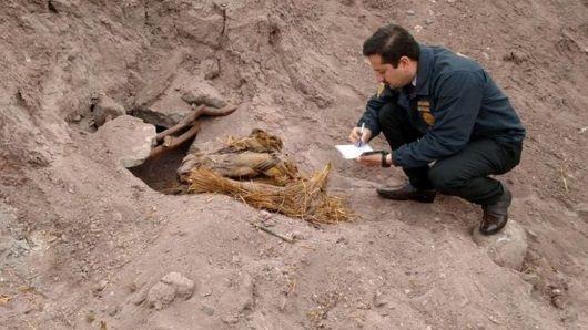 Momias de la Cultura Copiapó encontradas en Atacama. Chile. Crédito: PDI