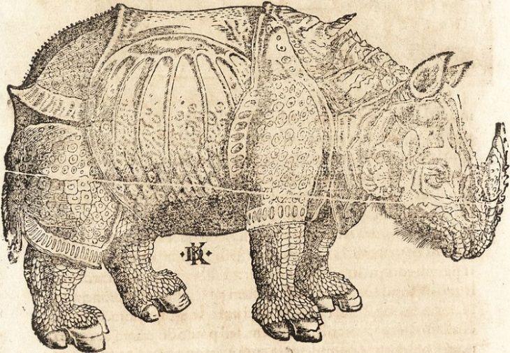 rinoceronte Prodigiorum Ac Ostentorum Chronicon