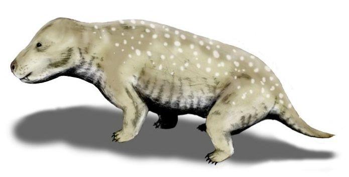 Exaeretodon frenguellii, Traversodontidae