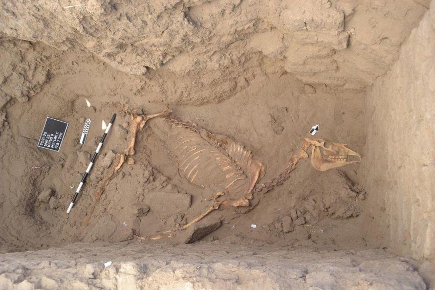 enterramiento de un caballo en tombos sudan