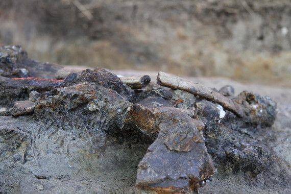 rinoceronte prehistoria filipinas