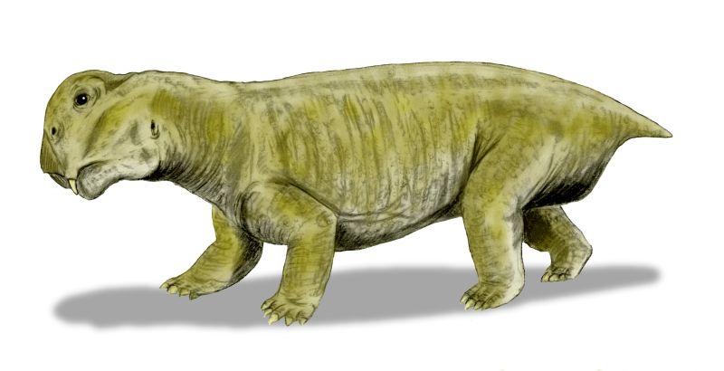 Lystrosaurus murrayi