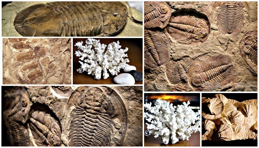 Resultado de imagen para Extinción del Ordovícico