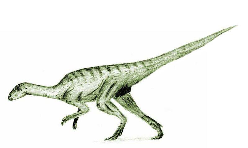 agilisaurus