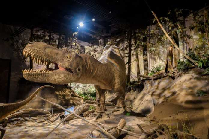 Albertosaurus dinosaurio