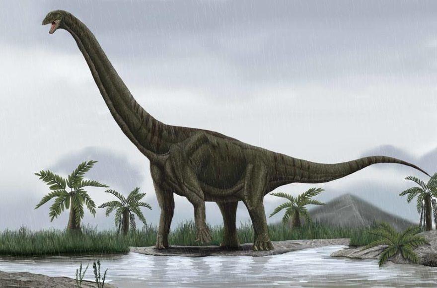 dinosaurio euhelopus