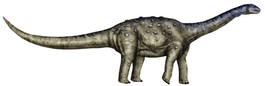 Aeolosaurus dinosaurio