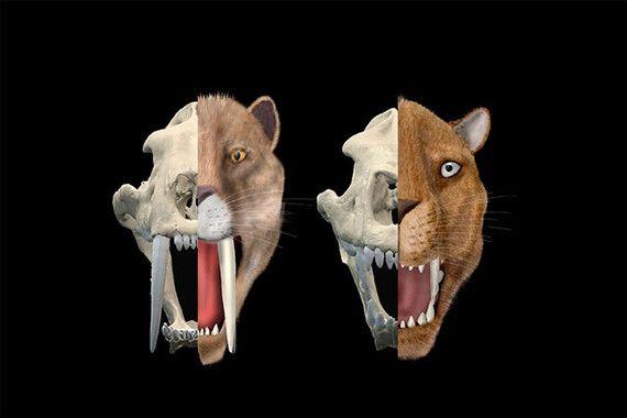 tipos dientes de sable