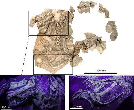 concavenator dinosaurio cuenca