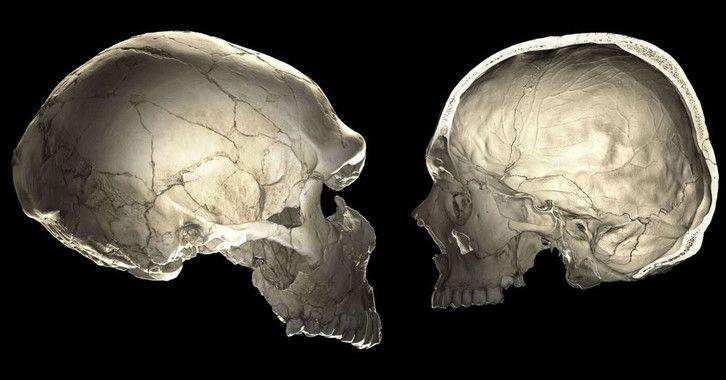 genes neandertales cerebro humano moderno