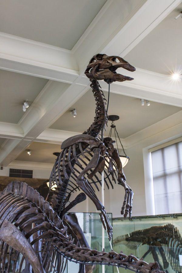 esqueleto anatotitan