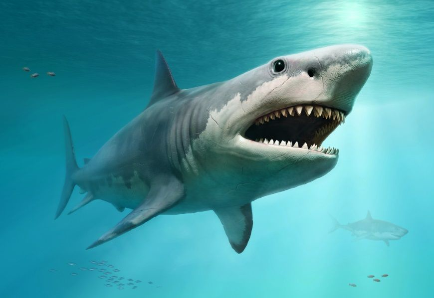 megalodon recreacion