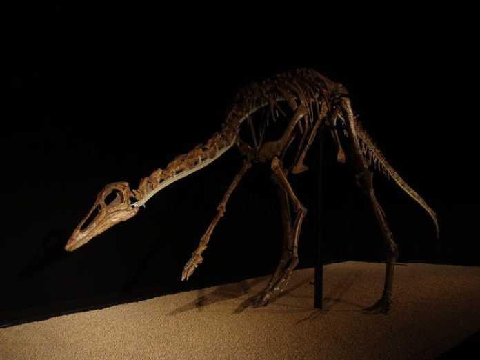 esqueleto de anserimimus
