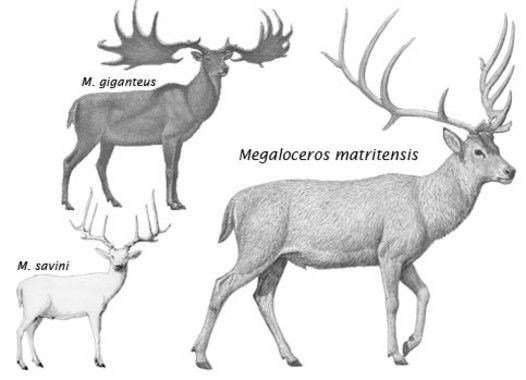 ciervos gigantes