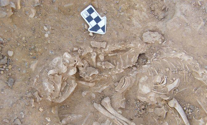 restos de gatos 6000 años