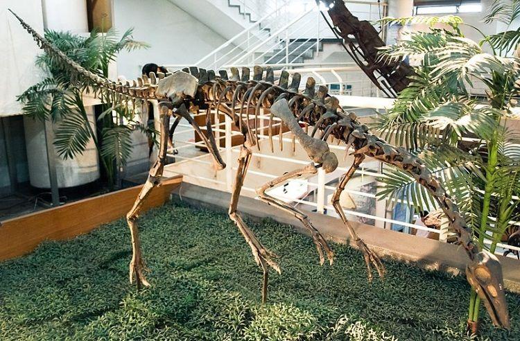 esqueleto de Archaeornithomimus
