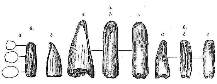 dientes de aublysodon