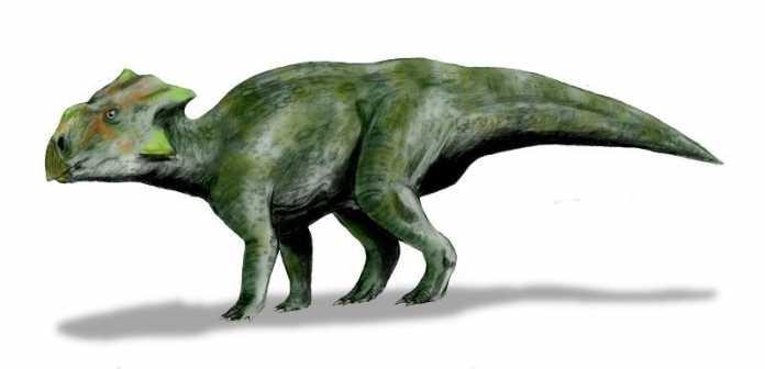 dinosaurio bagaceratops