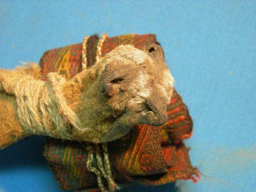 bolsa hocicos zorros indigenas bolivianos
