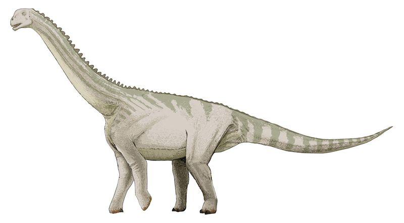 bellusaurus dinosaurio