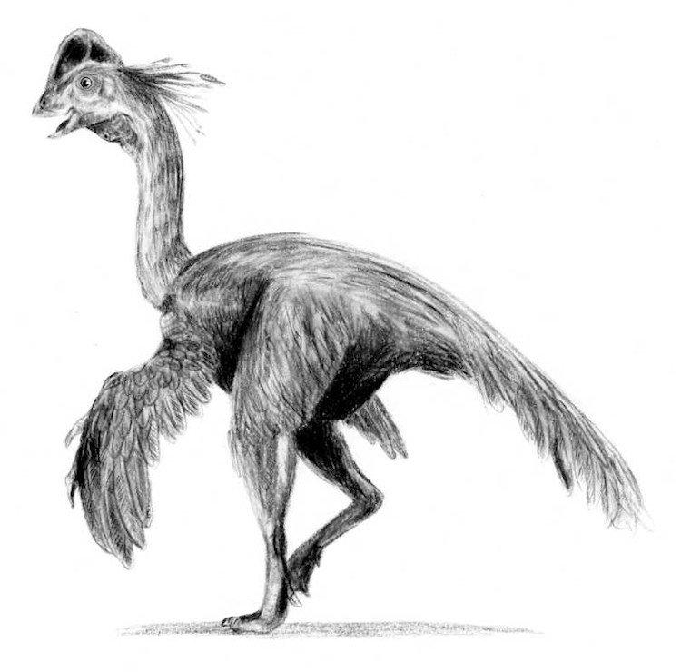 Caenagnathus