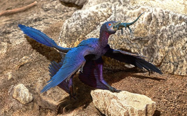 microraptor china
