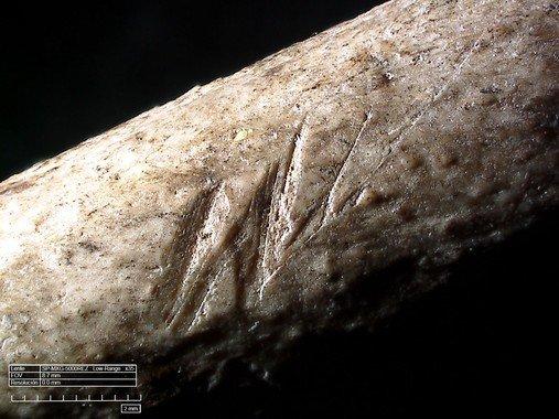 marcas corte plumas aves 300000 años