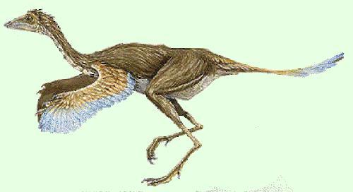 dinosaurio Calamospondylus