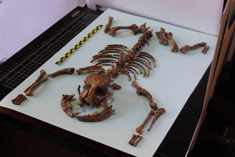 esqueleto perro romano