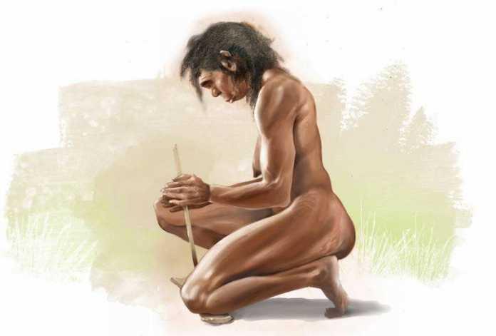 alimentacion primeros hominidos