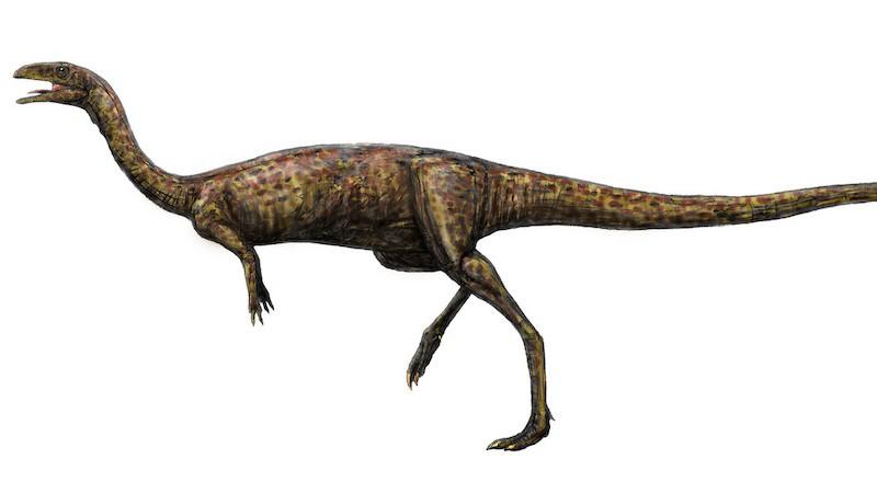 dinosaurio elafrosaurio