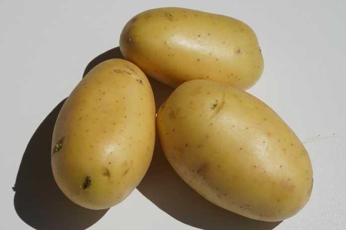 origen de la papa o patata
