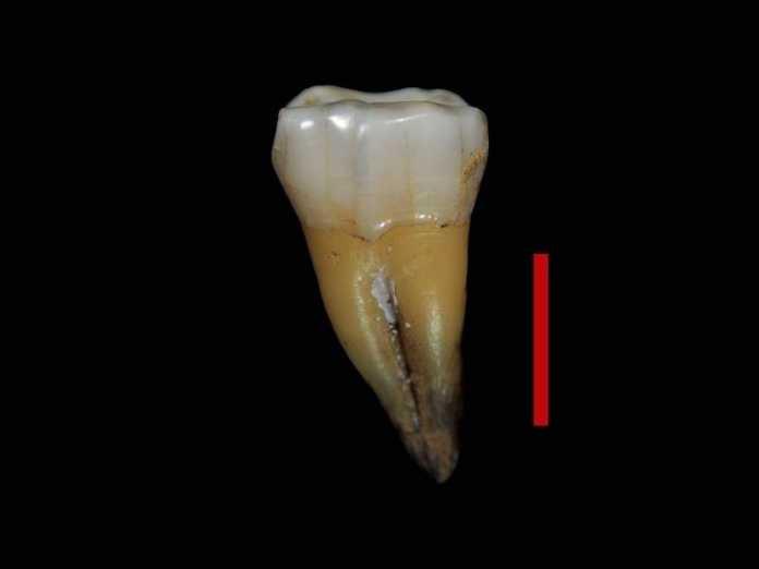 primeros humanos modernos europa