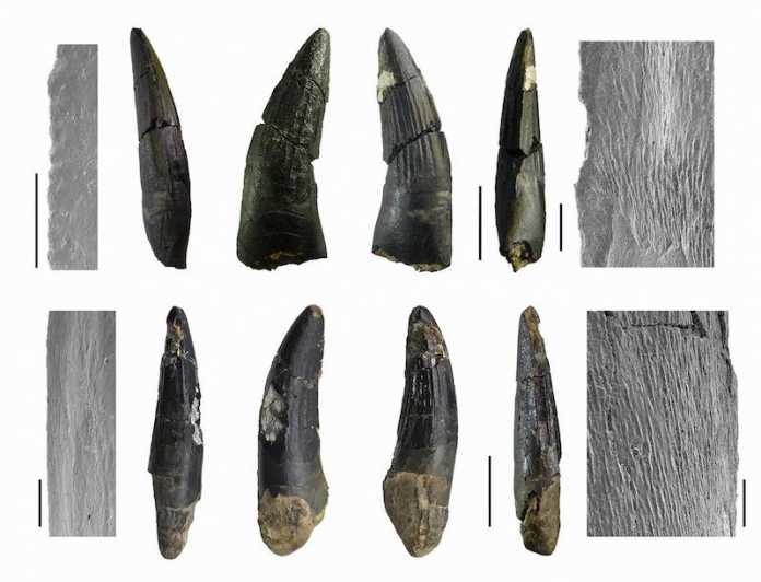 dientes espinosaurus españa