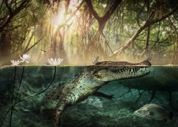 antepasado cocodrilo