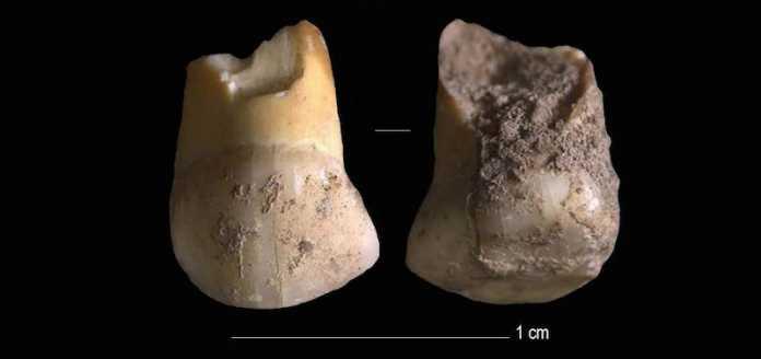 diente neandertal