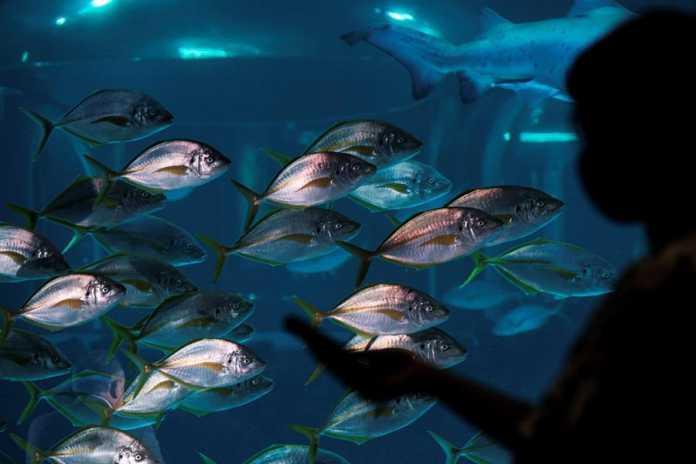 proteccion del ecosistema canario